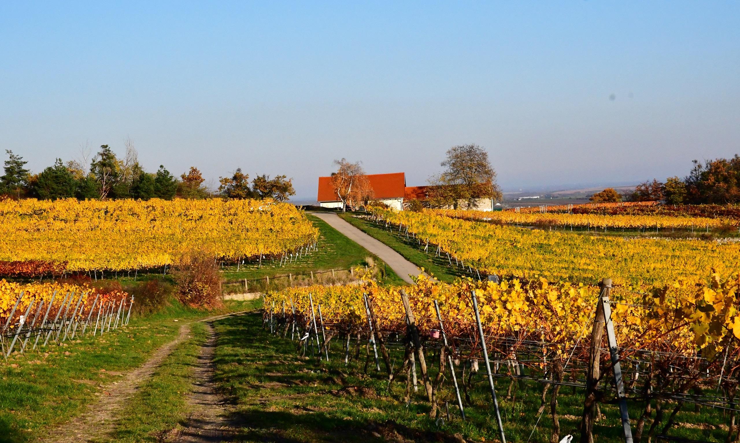 Das Winzerhaus  am Altenberg mitten in den Weingärten